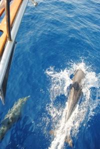 THE SEA -Dolphin